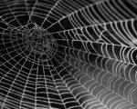 終わりなき浄罪 SCP-5683 – 「僕のお部屋に来ないかい?」クモがハエに呼びかけた